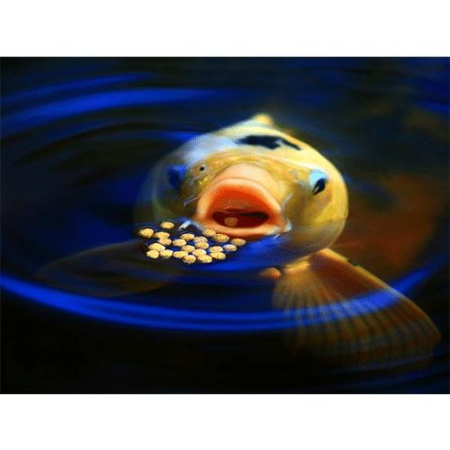 Fish Medications