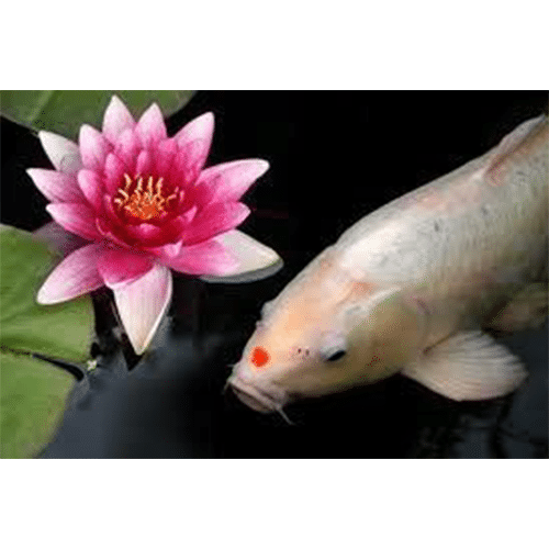 Fish & Plant Care